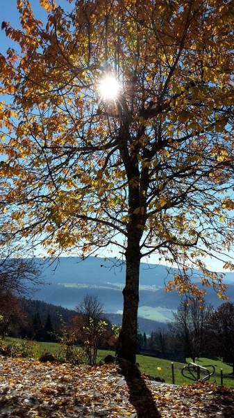 2015-11-01 La haute Borne Le Retemberg (67)-30